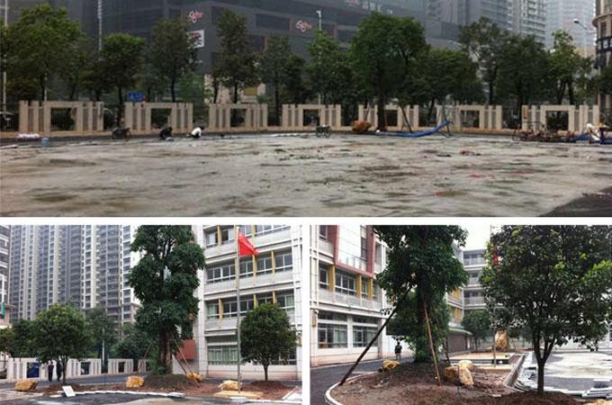 体育东小学绿化工程